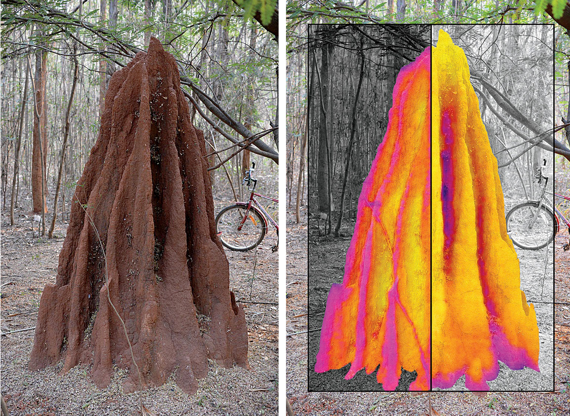 Harvard Study Termite Mounds Circulate Air Sneezing Once A Day Harvard Magazine