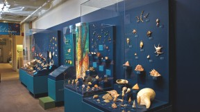 A view of <i>Mollusks: Shelled Masters of the Marine Realm,</i> a new exhibition at the Harvard Museum of Natural History