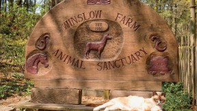 The evocative entrance to Winslow Farm Sanctuary