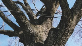<i>CoExist</i> by Roberto Mighty is displayed at the Arnold Arboretum.