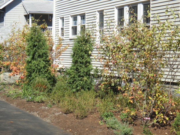 The suburban lawn outside this home in Belmont, Massachusetts, was recently replaced with mostly indigenous plants, such as blueberry and raspberry bushes, serviceberry trees, and hardy perennials, along with a variety of fragrant herbs that withstand light treading. Homeowners Hillary Wyon and Paul Williamson opted for this organically maintained garden (designed by Elizabeth Gourley) over the traditional turf to conserve water, eliminate mowing, and avoid use of synthetic chemicals.