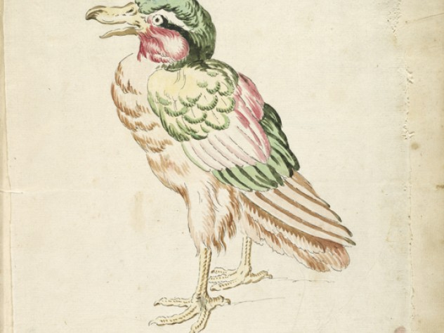 Jean-Baptiste Oudry, <i>Standing Bird</i> from the <i>Avian Album,</i> 18th century. Watercolor and black ink over traces of graphite on off-white antique laid paper, adhered to cream antique laid paper.