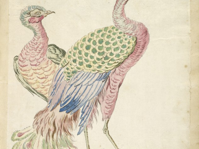 Jean-Baptiste Oudry, <i>Two Peacocks</i> from the <i>Avian Album,</i> 18th century. Watercolor and black ink over traces of graphite on off-white antique laid paper, adhered to cream antique laid paper.