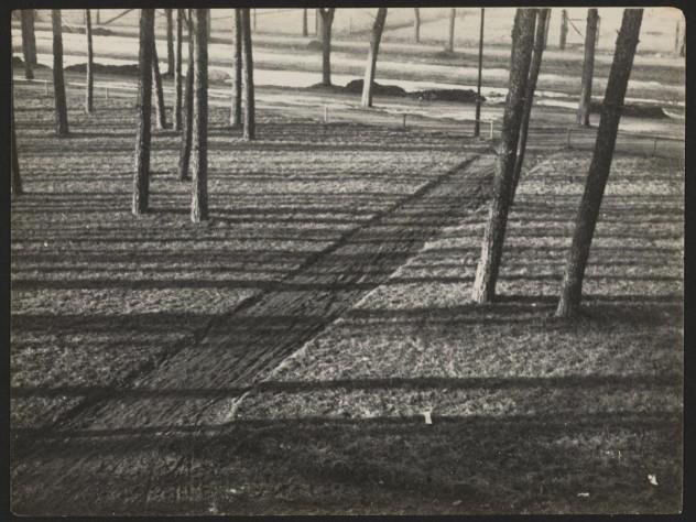 <i>Untitled</i> (Trees and Shadows, Burgkühnauer Allee, Dessau), April 1, 1929