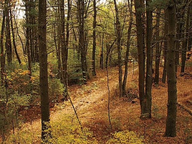 A woodland scene at the farm
