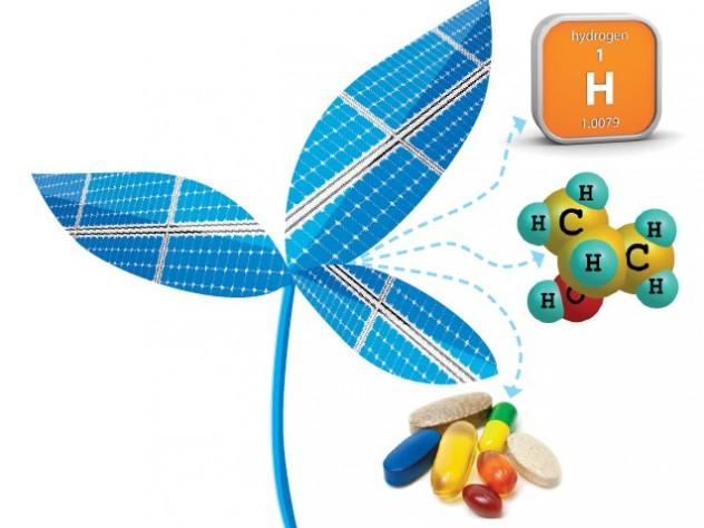 Pesquisadores de Harvard desenvolveram uma Pesquisadores de Harvard desenvolveram uma folha biônica pode girar a luz solar e a água no combustível livre