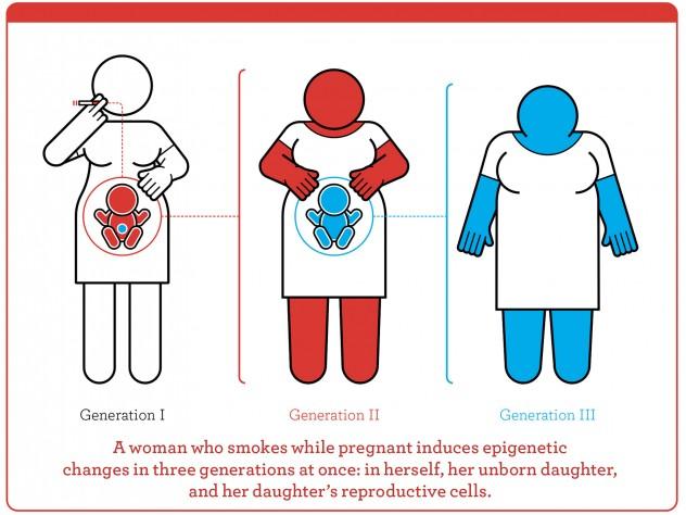 Epigenetic inheritance explained by in-utero exposures ...