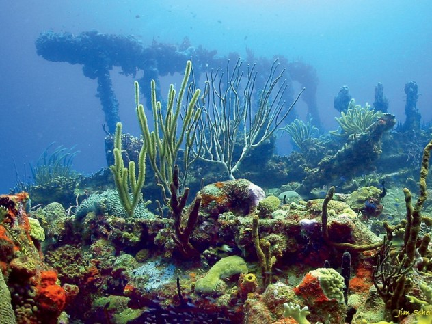 Wreck of the <i>Rhone,</i> British Virgin Islands, 2005