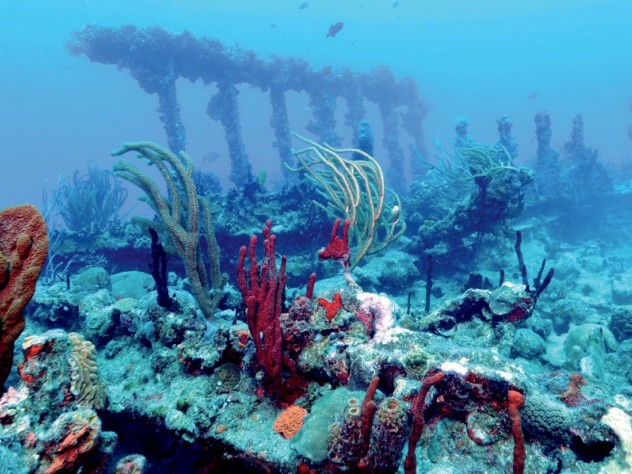 Wreck of the <i>Rhone,</i> British Virgin Islands, 2011