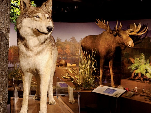 Denizens of <i>New England Forests,</i> a new permanent exhibit at the Harvard Museum of Natural History