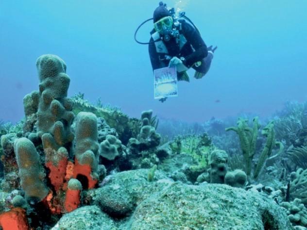 A brain coral, four feet in diameter, against a backdrop of pillar coral, Rhone Reef, British Virgin Islands, 2011