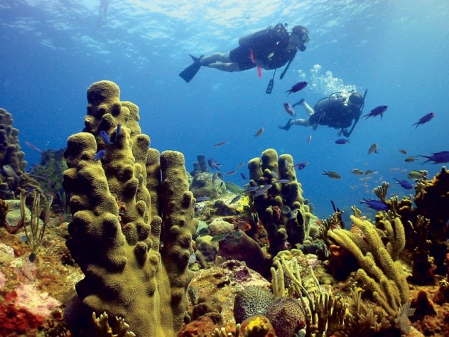 Pillar and other corals, Rhone Reef, British Virgin Islands, 2005