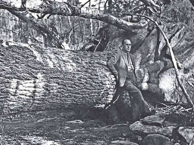 Harvard Forest director Al Cline stands next to a fallen hemlock, 1938.