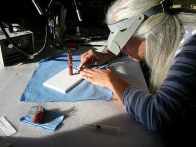 Preservation specialist and glass worker Elizabeth Brill cleaned the models and reattached pieces that had fallen off owing to glue failure. Here she works on a model of red coral. (MCZ SC5, <i>Corallium rubrum</i>)