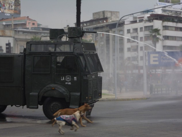 Stray dogs chase police trucks blasting water to break up a student protest in Santiago.