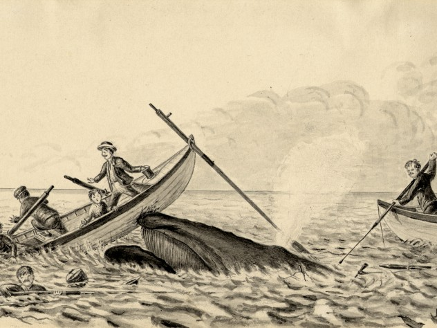 """The Harpooned Whale in rising to 'blow' comes up under one boat staving in the bow and throwing the occupants into the water. The second boat is continuing the pursuit while the crew of the first clings to the craft until rescued by the schooner."""
