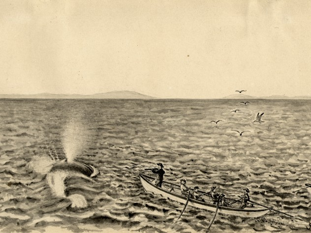 """This shows the use of the shoulder gun firing a bomb lance and also the exact appearance of a spouting Whale when seen close at hand. This method of whaling was used by the Provincetown whalers in the pursuit of Finback Whales in Massachusetts Bay."""