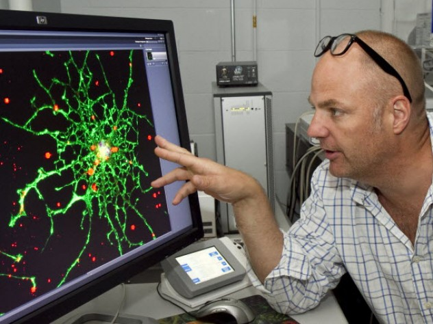 Kevin Kit Parker, the Thomas D. Cabot Associate Professor of Applied Science and Associate Professor of Biomedical Engineering, is researching traumatic brain injury (primarily from his experience in the military)