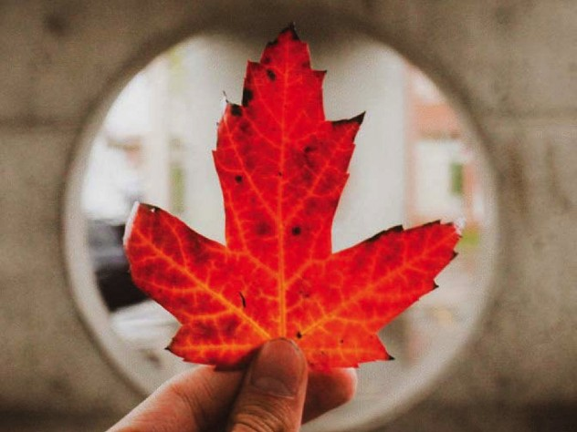 A hand holds a brilliant red maple leaf centered against a round glass window.