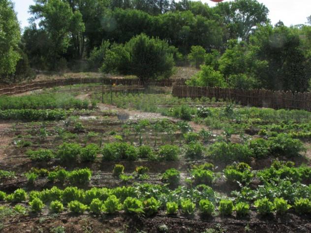Erin Wade's farm in Nambé, New Mexico, a hamlet 20 miles north of Santa Fe