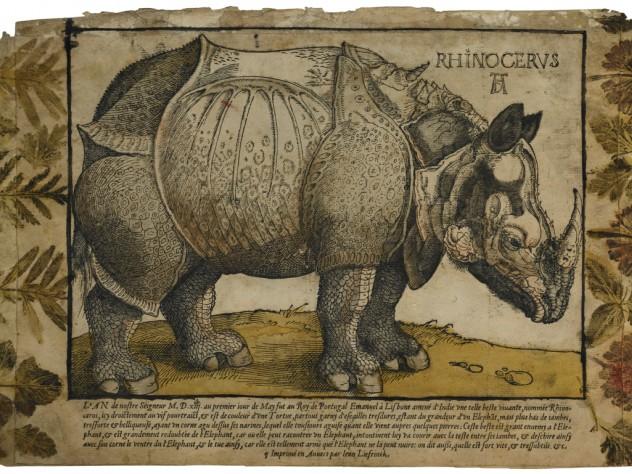 Unknown artist, after Albrecht Dürer and Hans Liefrinck the elder, <i>Rhinoceros,</i> c. 1550. Woodcut with hand- coloring, letterpress, and impressed plants.