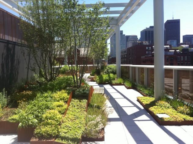 The rooftop garden, looking east