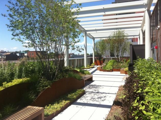 The new museum's rooftop garden, looking west