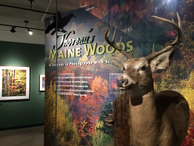 <i>Thoreau's Maine Woods: A Journey in Photographs with Scot Miller </i> is a current HMSC exhibition that combines anthropology and natural history.