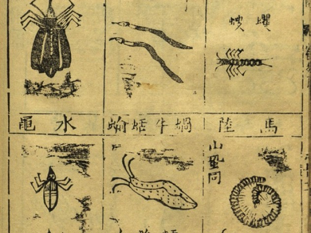 Pages from a first edition of the <i>Bencao gangmu</i> illustrate insects demonic and quotidian (this image) and assorted dragons and their bones (next image), all prescribed by Li for use in medicinal drugs.
