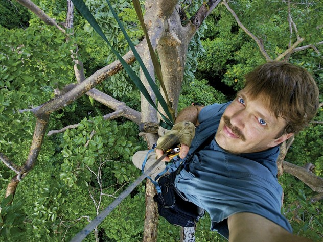 One of the 146 trees Tim Laman climbed to capture images of the rain forests' avian dwellers.