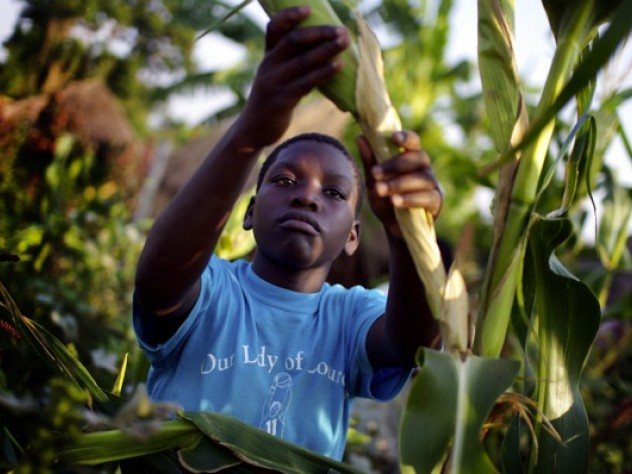 Hadija Kagoya, 14, harvests maize for the night's dinner at New Hope. The orphanage grows food on plots of land it owns and rents, for sale and for consumption by the children.