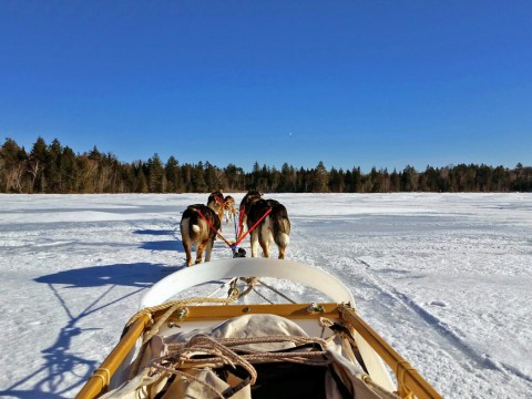 The view from the back of a sled, gliding over Umbagog Lake