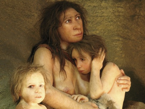 The ancestors of modern humans interbred with other early hominids, including Neanderthals.