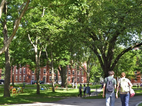 Scenes of Harvard Yard on a mid-July morning